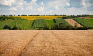 Особенности договора купли-продажи земельного пая: образец