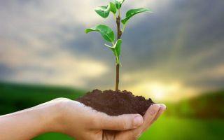 Виды и категории земель: классификация и целевое назначение
