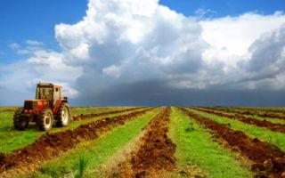 Процедура взятия земли в долгосрочную аренду у государства