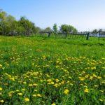 Дарение земельного участка и дома родственнику: документы, как оформить