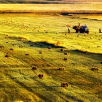 Возможно ли изъятие земельного участка у владельца