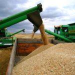 Зерно из комбайна