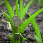 Оформление субсидии для сельхозпроизводителей