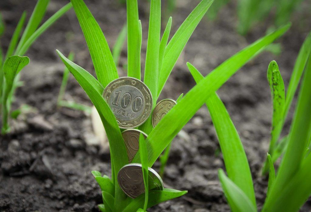 Куст с монетами