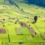 Что собой представляет земельный пай, особенности правового статуса