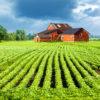 Последствия нецелевого использования земельного участка