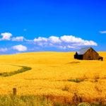 Процедура перевода арендованной земли в собственность
